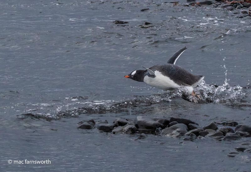 antartica-45.jpg