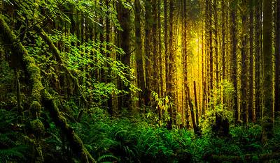 Olympic National Park_Washington