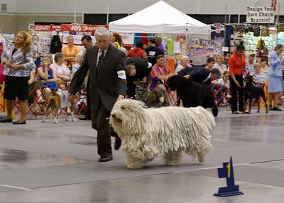 Dog Shows 2009