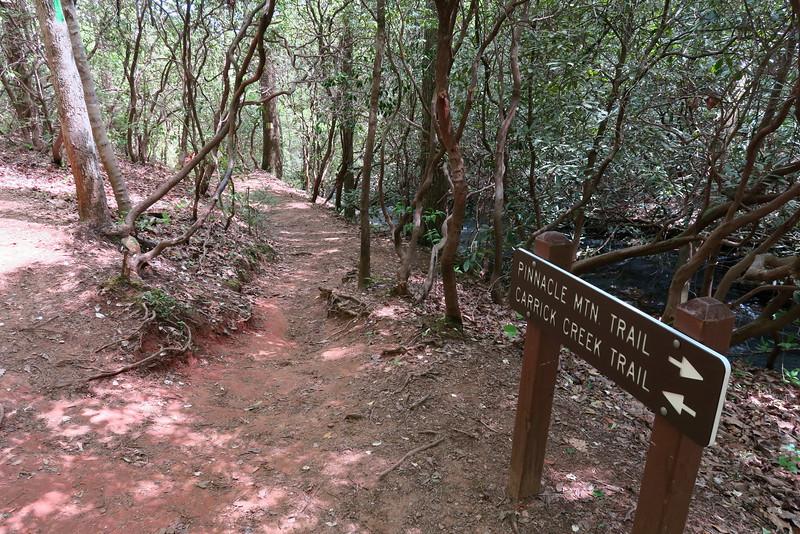 Pinnacle Mountain-Carrick Creek Trail Junction - 1,520'