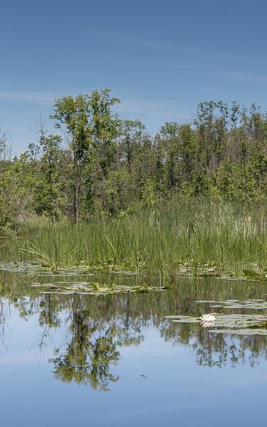 Lowes Lake-9110.jpg