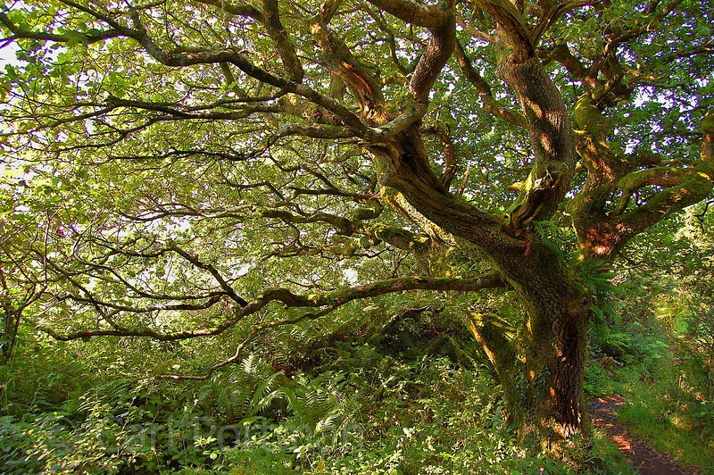 A beautiful tree in Devon - low res.jpg