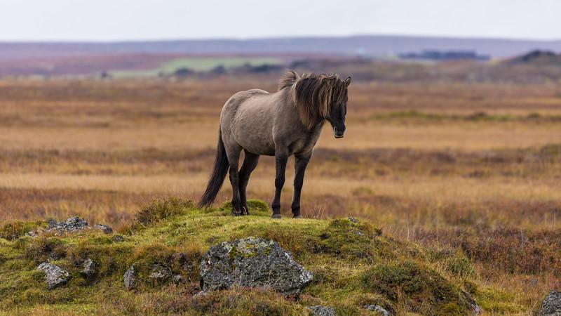 Iceland19_-3043.jpg