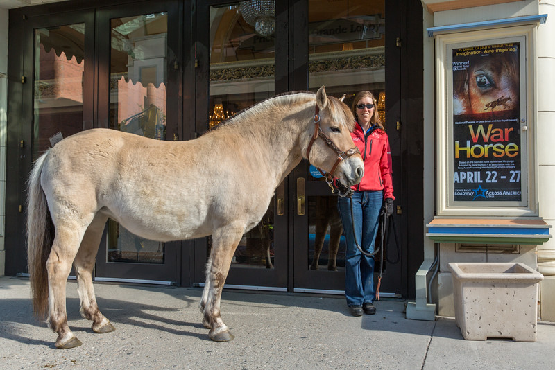 "SALT LAKE CITY, UT - April 23, 2014:  The National Ability Center's therapy horse Rjuka meets Joey, the leading life size puppet horse in the production of ""War Horse"" playing at the Capitol Theatre.  (Photo by Don Cook)"