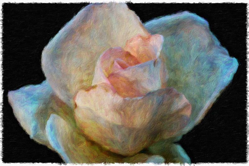 November 14 - Painted rose.jpg