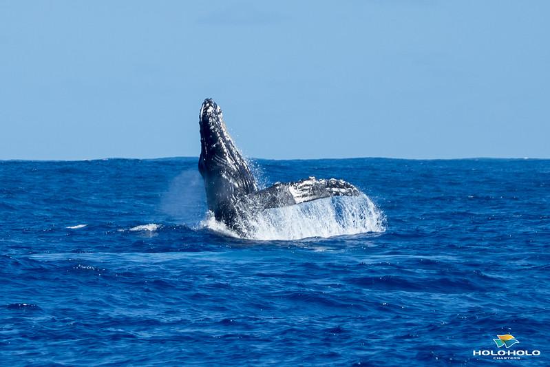 whales-leila-61.jpg