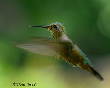 Los Alamos area Birds