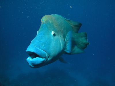Great Barrier Reef Sea Life