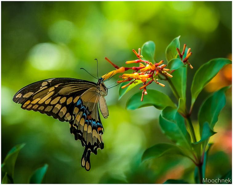 wowbutterfly.jpg