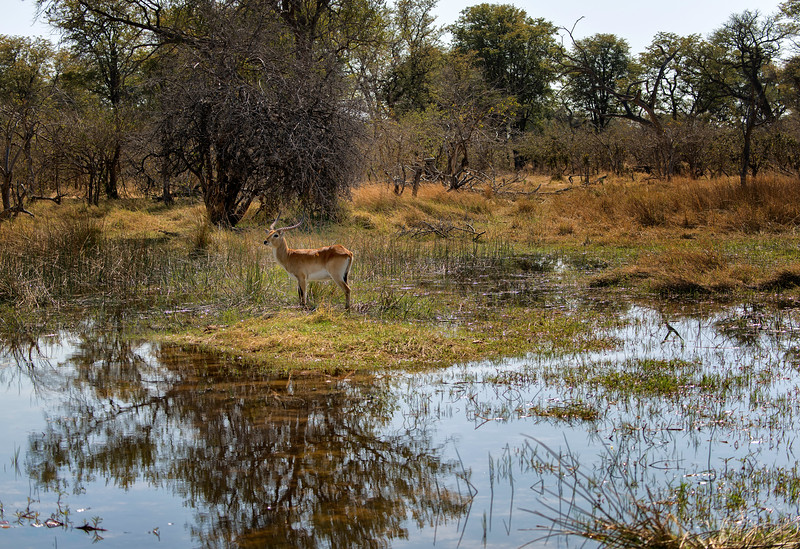 2014-08Aug-Okavango Masters-10-Edit.jpg