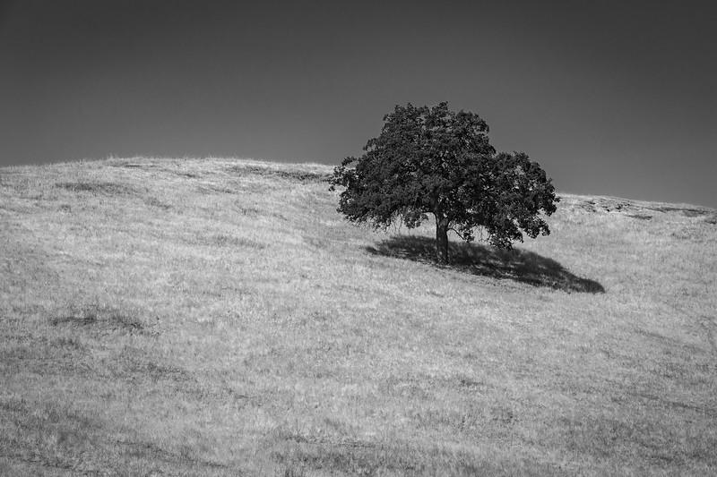 Sequoia-4838.jpg