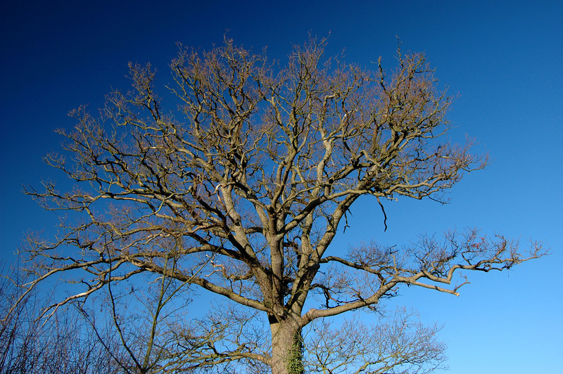 041226 2005 England - Henley - Christmas with Robertsons - Sonning Common Trees _F _P ~E ~L.JPG