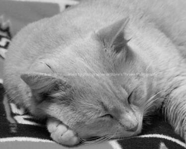 023-cat_tj-warren_co-06jan09-bw-1152