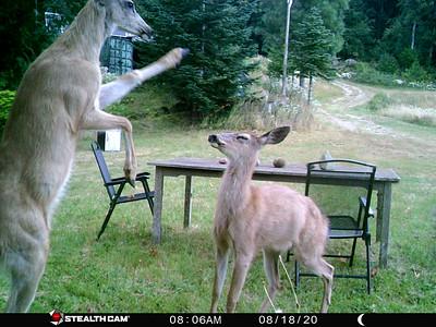 Wild Animals at the Cabin