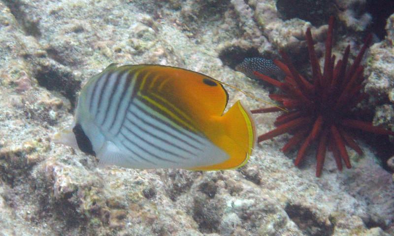 528- 20080416- Hawaii 20-Snorkelling IMG_0792.jpg