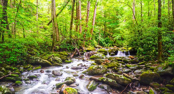 Great Smokies NP Gallery