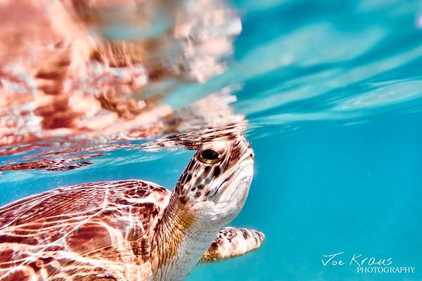 Underwater Wonders - VINP