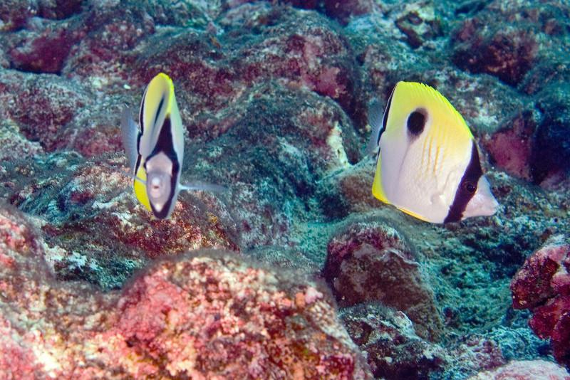Teardrop Butterflies 1.jpg