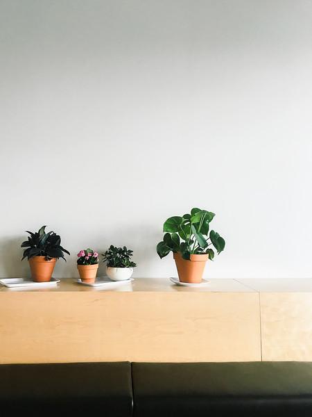 equator coffee plants.jpg