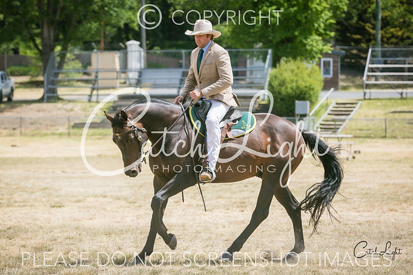 Ch/Res Senior Hack over 15hh