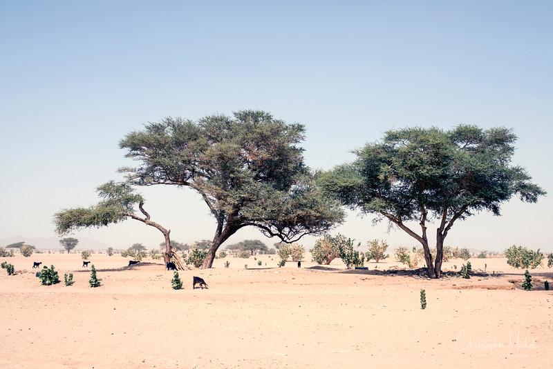 2-3-17228984Meroe-Bayuda Desert-Karima.jpg