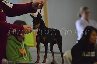Misc dog show pics