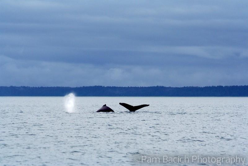 Three Humpbacks in a Row
