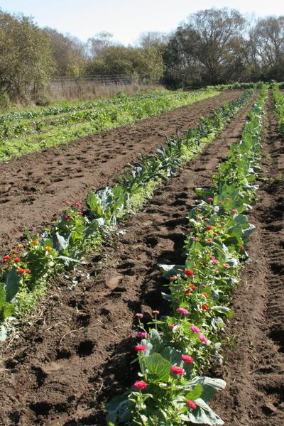 Gospel Flats Farm