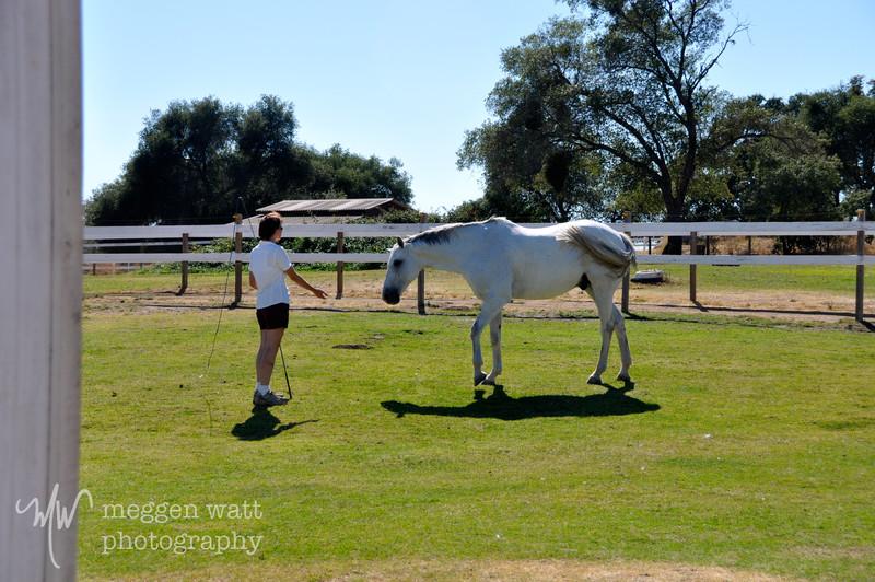EB&Horses-144.jpg