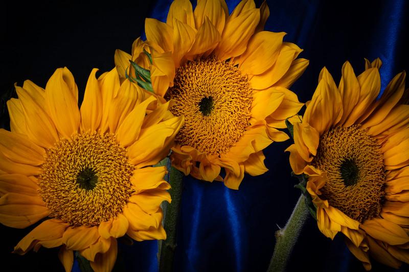 Botanicals-038.jpg