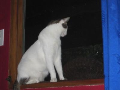 Azul - Wally & Todd's Kitty Baby