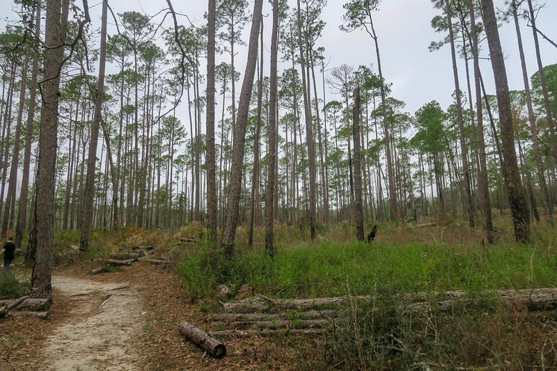 Terrace Trail