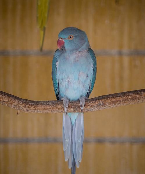 Parrot in Melios Zoo