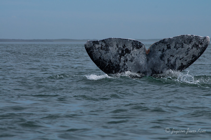 Mexico-Loreto-Whale-2409.jpg