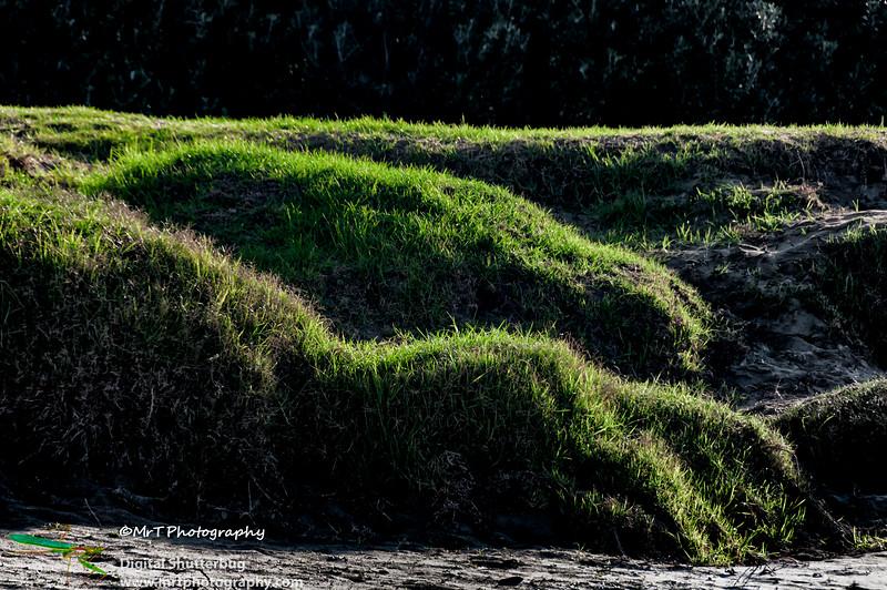 Grassy knolls Orewa Beach