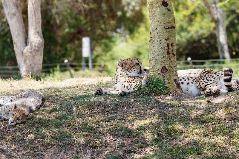 2016.06.01 Safari Park 0040.jpg
