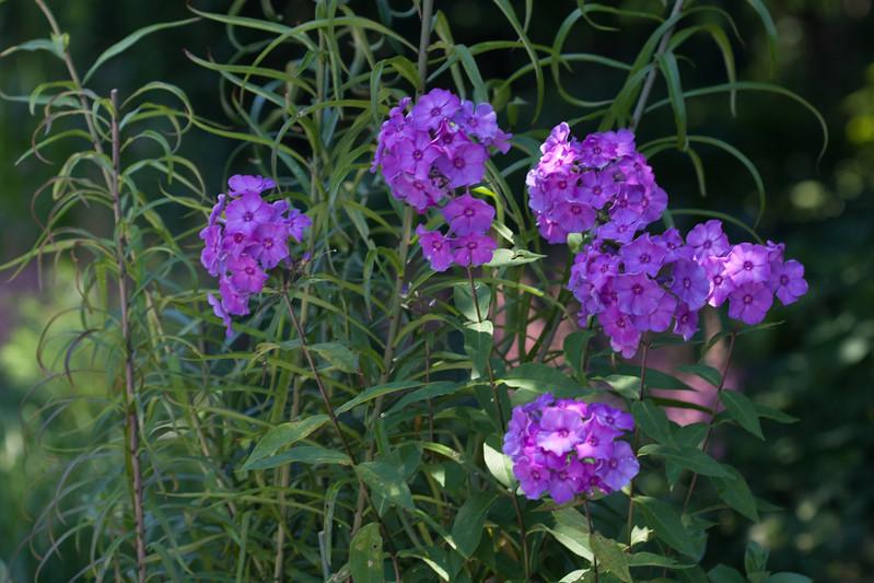2009 06 30_NY Botanical Gardens_0749.jpg