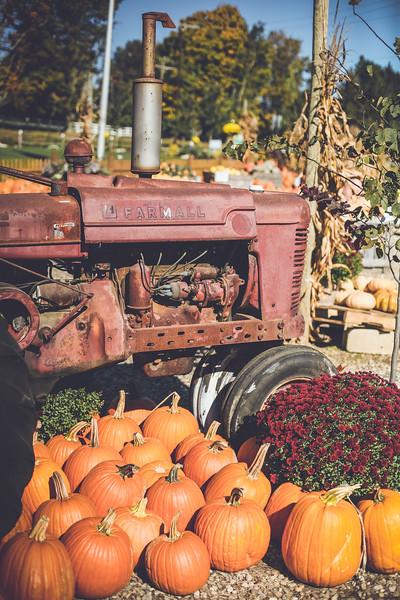 pumpkin picking 10-2016 _IMG_0905.jpg