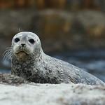 Seal2.tif.jpg