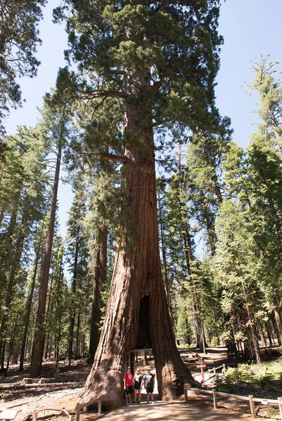 2019 San Francisco Yosemite Vacation 052 - Mariposa Grove.jpg