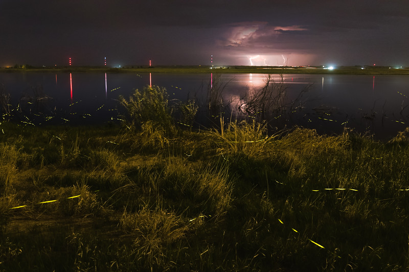 Lightning and Lightning Bugs