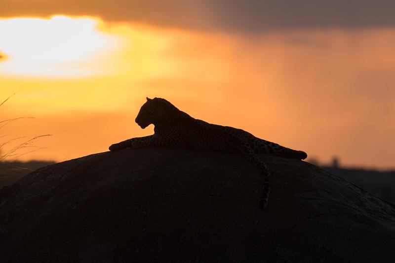 Africa  - 101016- 225.jpg