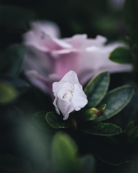 budding-flower.jpg