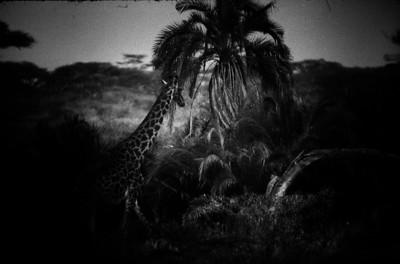Wild Beast