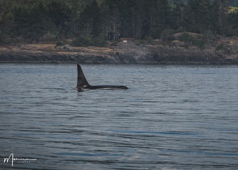 2019-08-31 - Whale Watching-1958_edit.jpg