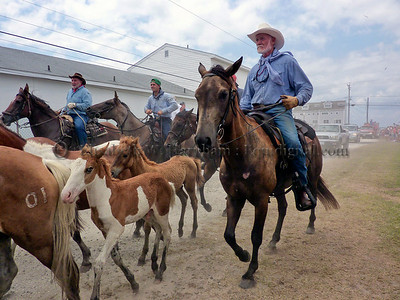 Rodeos, Penning, Other Equestrian Events and Competitions