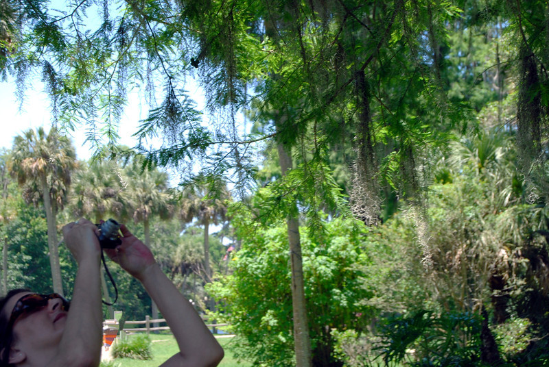 2014 Silver Springs, Florida (19).JPG
