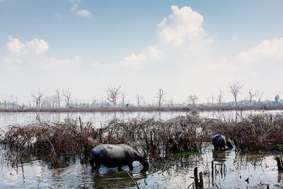 Cambodia 2015