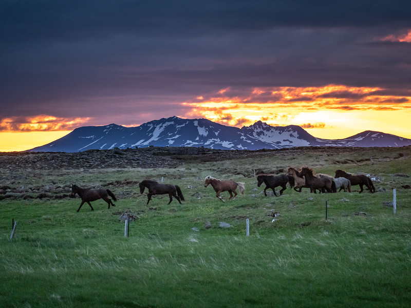 Horses of Iceland    Photography by Wayne Heim