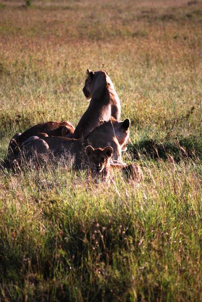 Serengeti (110).JPG
